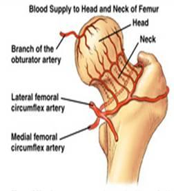 vascolarizzazione della testa femorale