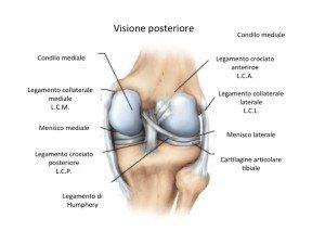 anatomia del ginocchio visione posteriore