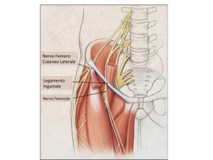 Anatomia nervo femoro cutaneo laterale