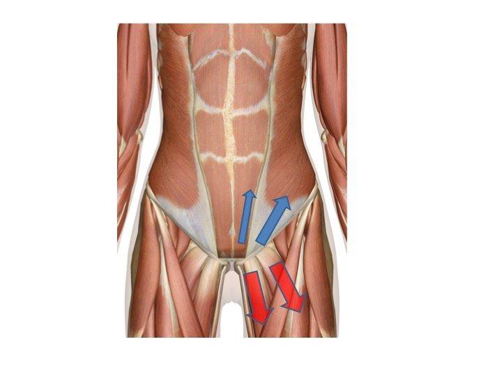 sollecitazioni della muscolatura della coscia
