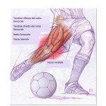 Anatomia del quadricipite