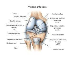 anatomia del ginocchio visione anteriore