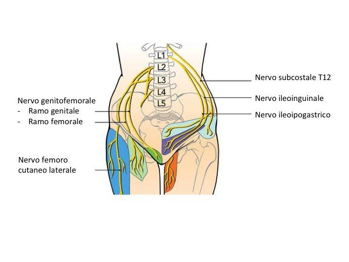 Nervo genitofemorale